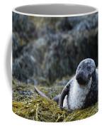 Loch Dunvegan's Harbor Seal Coffee Mug