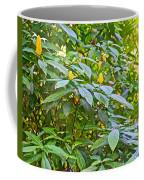 Lollipop Bush In Bourbon Resort Gardens Near Iguazu Falls National Park-brazil  Coffee Mug