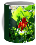 Lone Nasturtium   Coffee Mug