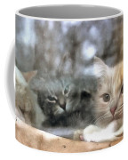 Lonely Kittens Behind The Glass Coffee Mug