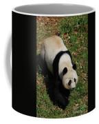 Looking Down At A Cute Giant Panda Bear Coffee Mug