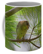 Looking Down - Common Sparrow - Passer Domesticus Coffee Mug