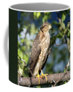 Looking For Supper Coffee Mug
