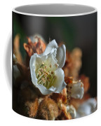 Loquat Flower Coffee Mug