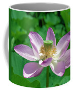 Lotus--fading IIi Dl0081 Coffee Mug
