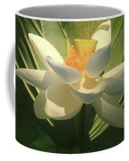 Lotus Light Coffee Mug