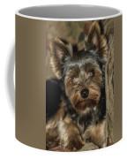 Loveable Yorkie  Coffee Mug