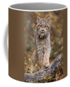 Lynx Kit Coffee Mug