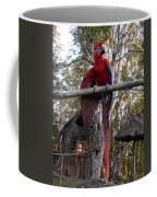 Macaw Guatemala Coffee Mug