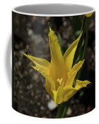 Mackinac Island Flowers 10663 Coffee Mug