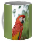 Macraw Coffee Mug