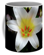 Macro Close Up Of White Lily Flower In Full Blossom Coffee Mug