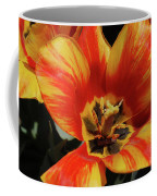 Macro Of A Blooming Striped Yellow And Red Tulip Coffee Mug