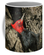 Magellanic Woodpecker - Patagonia Coffee Mug