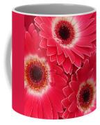 Magenta Gerber Daisies Coffee Mug
