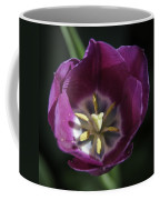 Magenta Tulip Center Squared Coffee Mug