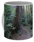 Magical Path Through The Redwoods On Mount Tamalpais Coffee Mug