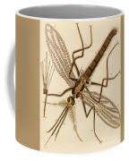 Magnified Mosquito Coffee Mug