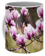 Magnolia Blooming In An Early Spring Coffee Mug