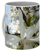 Magnolia Tree Flowers Art Prints White Magnolia Flower Coffee Mug