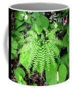 Maidenhair Fern, Adiantum Pedatum And Friends Coffee Mug