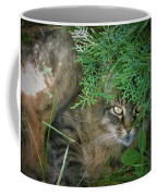 Maine Coon Coffee Mug