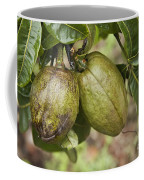 Malabar Chestnuts Coffee Mug