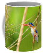 Malachite Kingfisher On The Hunt Coffee Mug