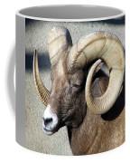 Male Bighorn Sheep Ram Coffee Mug
