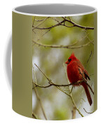 Male Cardnial Coffee Mug
