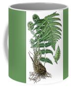 male fern, Dryopteris filix-mas Coffee Mug