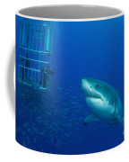 Male Great White Shark And Divers Coffee Mug