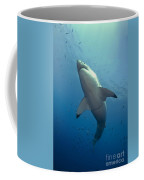 Male Great White Sharks Belly Coffee Mug