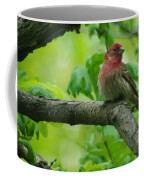 Male House Finch Coffee Mug