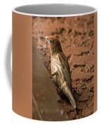 Male House Finch V10 Coffee Mug
