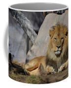 Male Lion Resting In The Warm Sunshine Coffee Mug