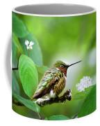 Male Ruby-throated Hummingbird At Rest Coffee Mug