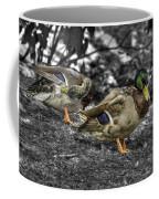 Mallard Duck A4 Coffee Mug
