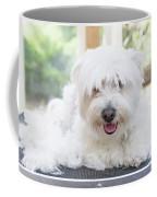 Maltese Dog Is Laying Next To Pile Of Hair Coffee Mug