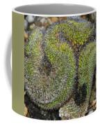 Mammillaria Red Cap Cristata Coffee Mug
