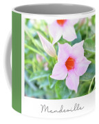 Mandevilla Pink Beauty Coffee Mug