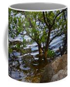 Mangroves And Coquina Coffee Mug