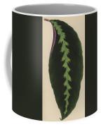 Maranta Warsewiczii Coffee Mug