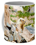 Marmot On Mount Massive Colorado Coffee Mug