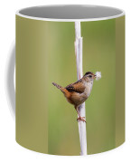 Marsh Wren Nest Building Coffee Mug