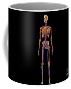 Medical Illustration Of Female Skeleton Coffee Mug