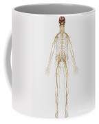 Medical Illustration Of Peripheral Coffee Mug