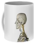 Medical Illustration Showing Thyroid Coffee Mug