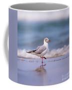 Mediterranean Gull Ichthyaetus Melanocephalus Coffee Mug