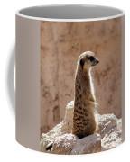 Meerkat Standing On Rock And Watching Coffee Mug